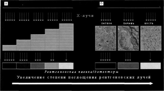 http://www.studmedlib.ru/cgi-bin/mb4x?usr_data=gd-image(doc,ISBN9785970429891-0007,pic_0033.jpg,-1,,00000000,)&hide_Cookie=yes